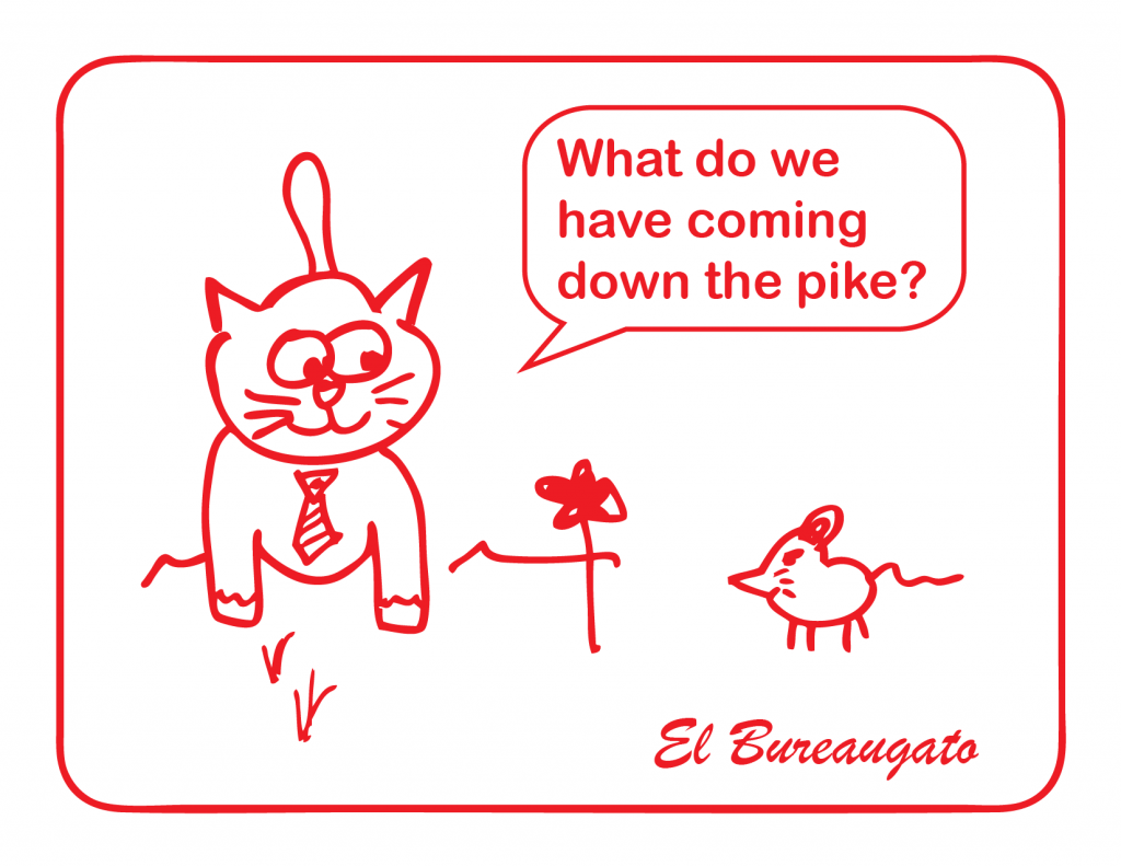"El Bureaugato says, ""What do we have coming down the pike?"""